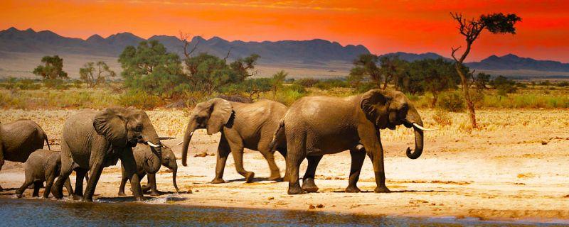 offerta tour safari in Tanzania  - promozione viaggio in Tanzania all inclusive