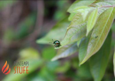 bontempi bruno rivenditore prodotti mayer braun deutschland offerta insetticida ecologico