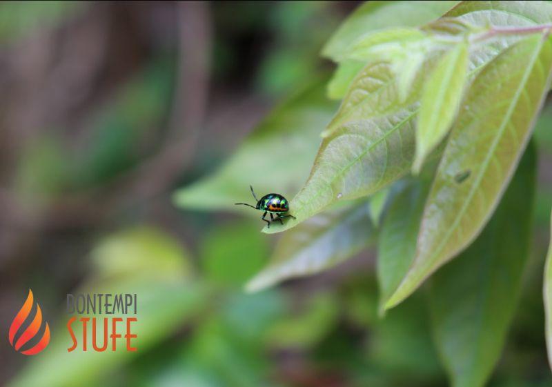BONTEMPI BRUNO rivenditore prodotti mayer braun deutschland - offerta insetticida ecologico