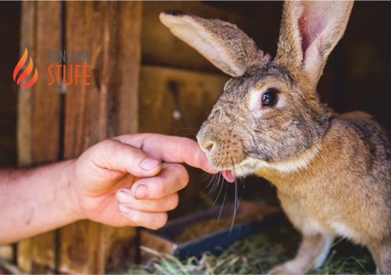 BONTEMPI BRUNO offerta mangime per animali da allevamento - integratori per animali