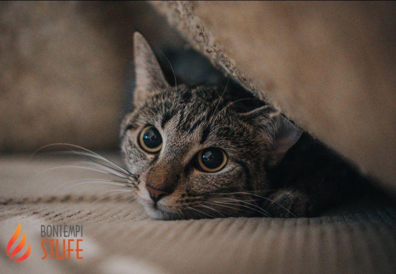 AZIENDA BONTEMPI BRUNO offerta prodotti monge gatto cane - promozione pet food