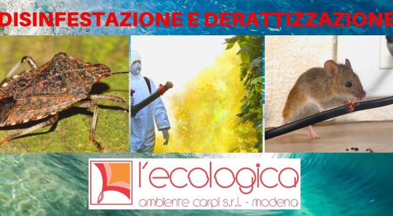 Offerta servizio di derattizzazione per interni ed esterni a Modena – Occasione servizio di disinfestazione a Modena