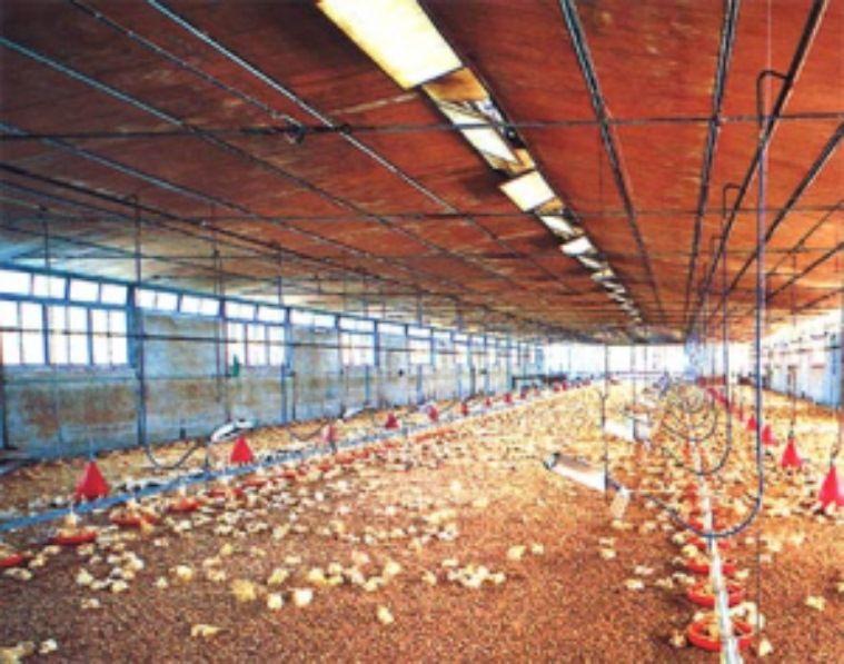Offerta vendita sistemi di riscaldamento elettrico serre e tunnel agricoli ed allevamenti