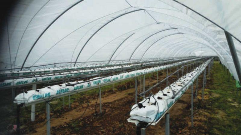 SISTEMI RISCALDAMENTO Matteo Diotisalvi - Offerta Sanificatore ozono per coltivazioni