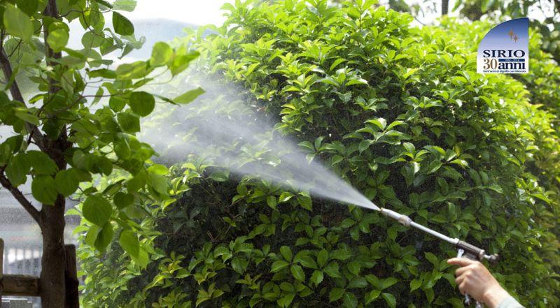 Offerta disinfestazione zanzare tigre Parma – Promozione disinfestazione scarafaggi e blatte parma