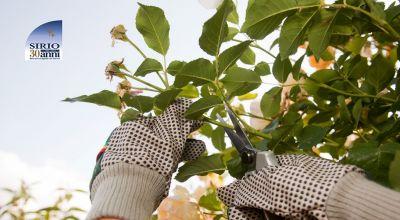 offerta manutenzione aree verdi parma promozione potatura e abbattimento piante parma