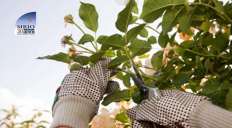 Offerta manutenzione aree verdi Parma – promozione potatura e abbattimento piante Parma