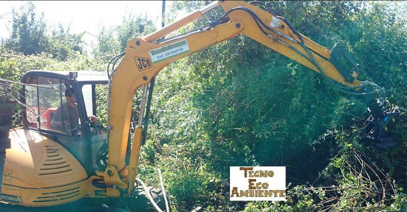 offerta potatura e abbattimenti in tree climbing toscana - TECNO ECO AMBIENTE