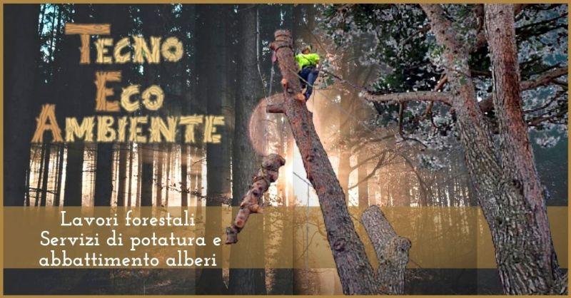 Servizi di potatura e abbattimento alberi in Versilia - manutenzione del verde Lucca