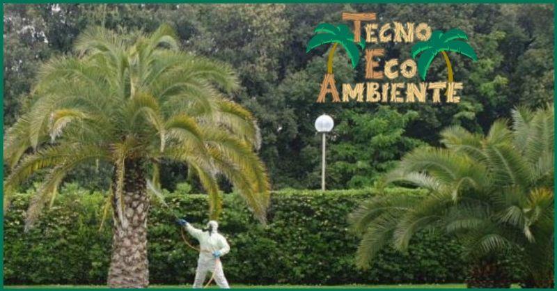 Trattamento contro il Punteruolo rosso palme Versilia - protezione e mantenimento Palme