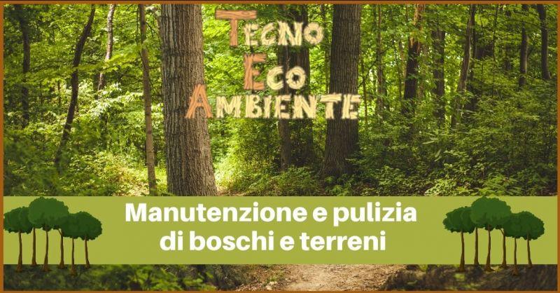 offerta manutenzione e pulizia di boschi e terreni Versilia - TECNOECOAMBIENTE