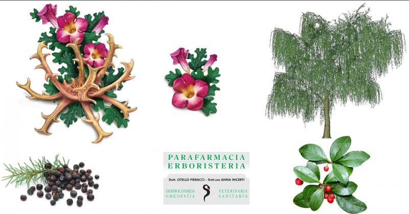 Offerta trattamento dell'artrosi Castellarano - Occasione esercizio fisico per l'artrosi Modena