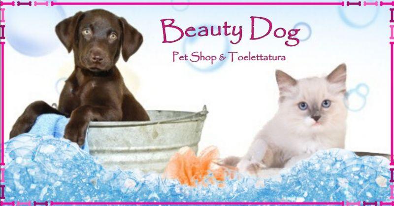Offerta toelettatura per animali domestici Terni - occasione pulizia professionale cani gatti
