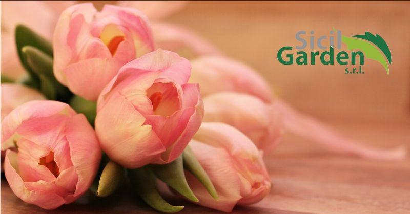 offerta vendita all ingrosso di articoli per fioristi ragusa - occasione piante e fiori ragusa
