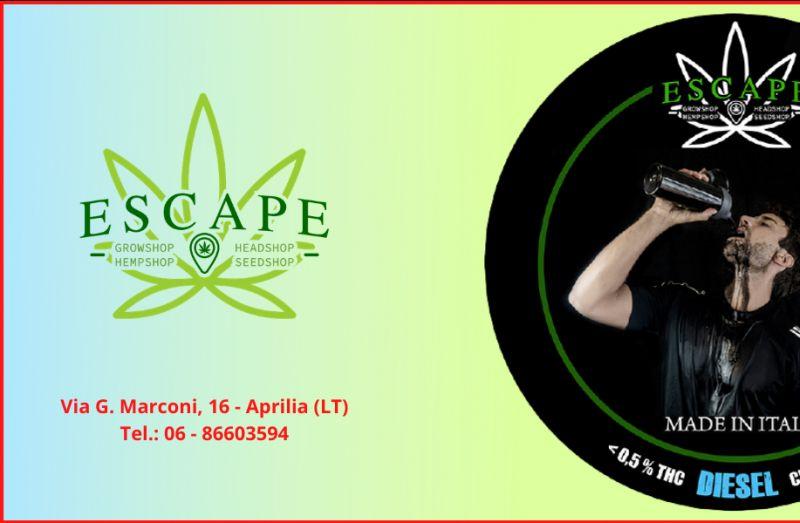 ESCAPE - Offerta vendita di Canapa Light Aprilia