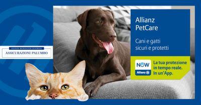 offerta festa del gatto italia 2020 offerta assicurazione animali agenzia benevento