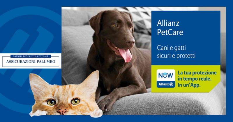 Offerta Festa del Gatto Italia 2020 - Offerta Assicurazione Animali Agenzia Benevento