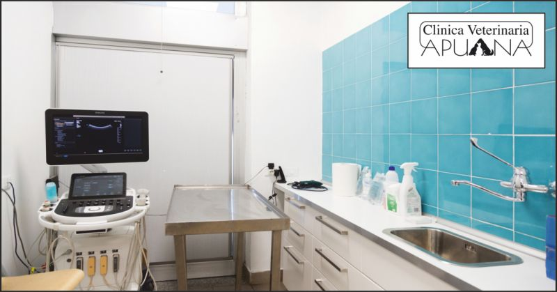clinica veterinaria apuana offerta ecografia gatto firenze - occasione ecografia torace lucca