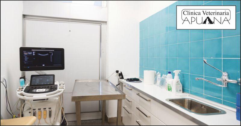 clinica apuana offerta ecografia fegato cane prato - occasione diagnosi patologie animali siena