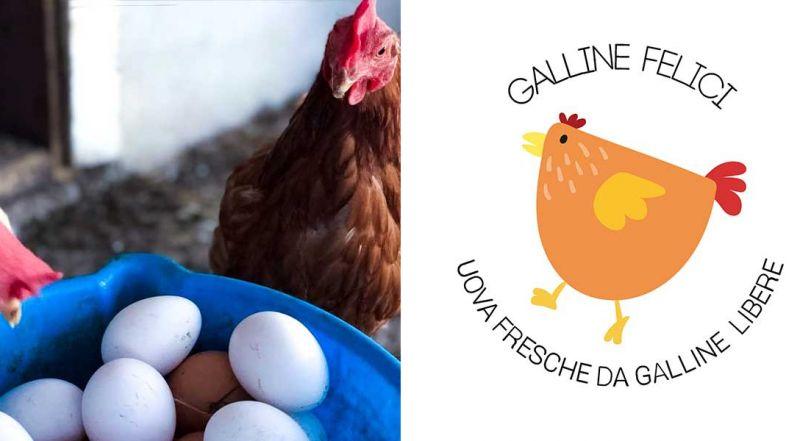 Occasione allevamento di galline Roma - Offerta prodotto sano zona La Storta