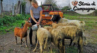 occasione fattoria didattica per scuole zona fiumicino