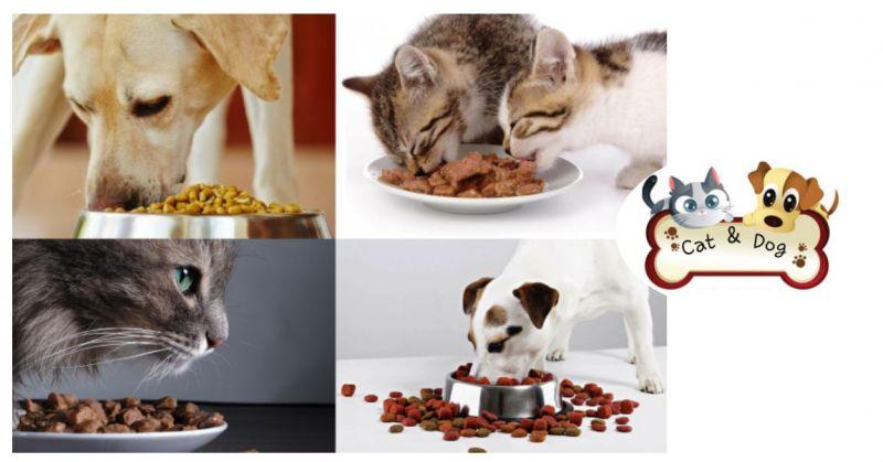 Cat & Dog - offerta crocchette Oscar menu carne o pesce alimento completo per gatti
