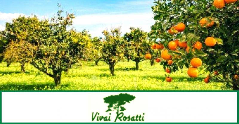 offerta produzione di alberi da frutto - occasione vendita piante e fiori da giardino