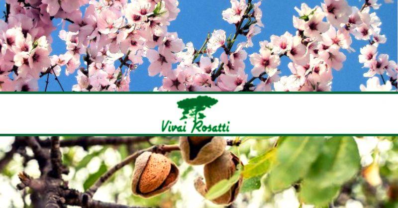offerta produzione e vendita alberi di mandorle - occasione dove acquistare piante di mandorlo