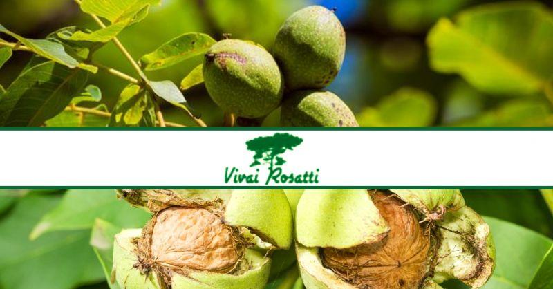 offerta produzione e vendita di piante di noce - occasione acquisto pianta delle noci