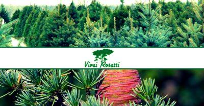 offerta produzione e vendita alberi di natale veri occasione vendita di cedri sempreverdi