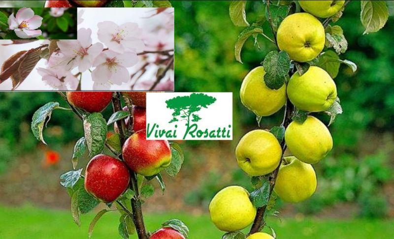 Offerta produzione specializzata in varietà di piante di melo