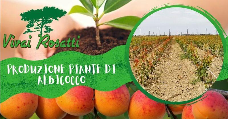 Offerta trova azienda che produce piante di Albicocco - Occasione fornitura piante di Albicocco Italia