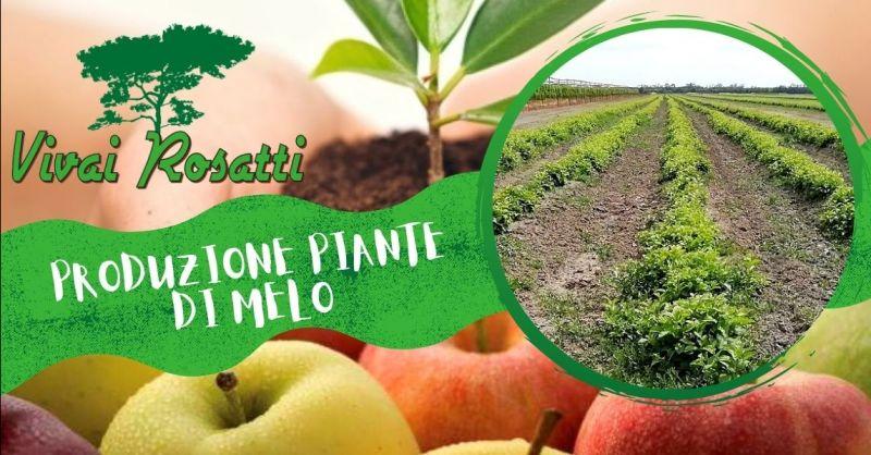 Offerta i migliori produttori di piante di Melo - Occasione vendita e produzione piante di Melo Italia