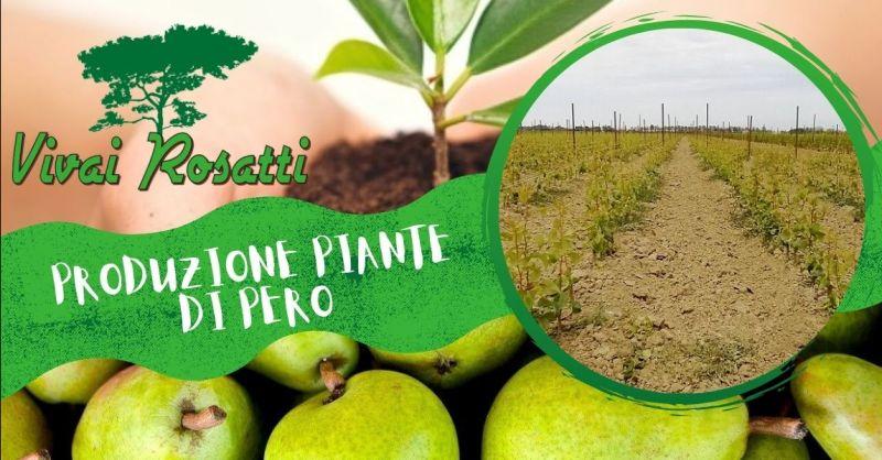Offerta Produzione piante di Pero di qualità - Occasione trova produttore piante di Pero Italia