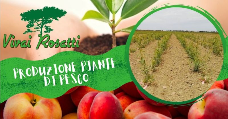 Offerta azienda specializzata produzione piante di Pesco polpa bianca gialla rossa Italia
