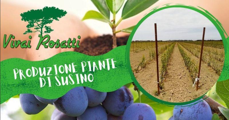 Offerta la migliore azienda che produce piante Susino - Occasione servizio produzione piante di susino Italia