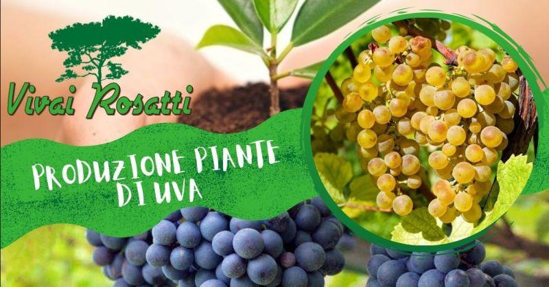 Offerta i migliori fornitori di piante di uva da tavola - Occasione Produzione piante di uva da vino Italia
