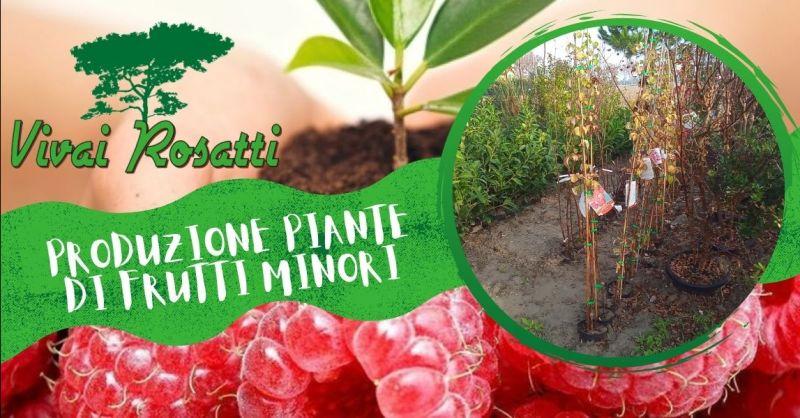 Offerta Produzione di piante di frutti minori - Occasione trova fornitore di piante frutta secca Italia