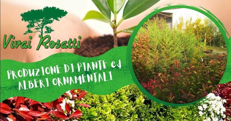 Offerta azienda specializzata produzione alberi ornamentali - Occasione fornitura piante per siepi Italia