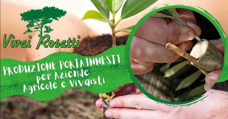 Offerta Produzione portainnesti per Aziende Agricole - Occasione servizio realizzazione innesti per Vivaisti