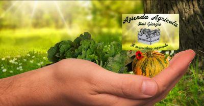 occasione vendita diretta frutta e ortaggi lucca vendita km 0 prodotti agricoli lucca