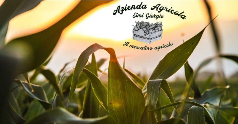 offerta produzione e vendita diretta prodotti agricoli locali Lucca - SIMI GIORGIO AGRICOLA