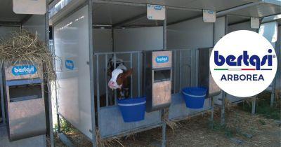 bertasi offerta box unicellulare o multiplo acciaio zincato a caldo antiurto svezzamento vitelli