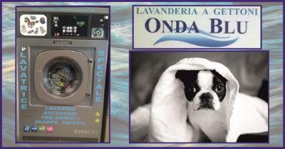 offerta lavaggio e disinfezione accessori indumenti animali new onda blu pet wash