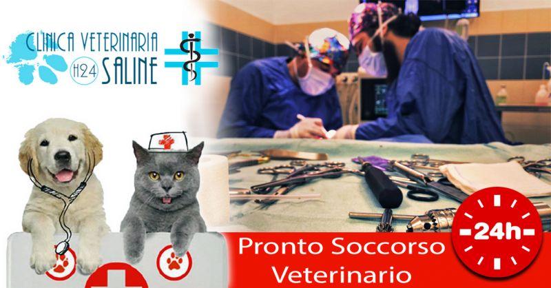 Offerta Pronto soccorso Veterinario Pescara - Occasione Pescara Pronto Intervento Veterinario