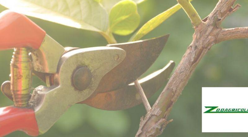 offerta attrezzi potatura e forbici da pota - articoli da giardinaggio e potatura
