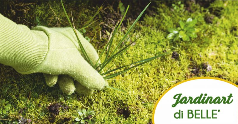 jardinart offerta giardinieri professionisti - occasione  cura del verde massa carrara