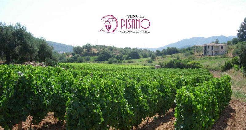 CANTINA TENUTE PISANO Jerzu - offerta produzione e vendita vini pregiati sardi da vigneti eterogenei