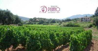 cantina tenute pisano jerzu offerta produzione e vendita vini pregiati sardi da vigneti eterogenei