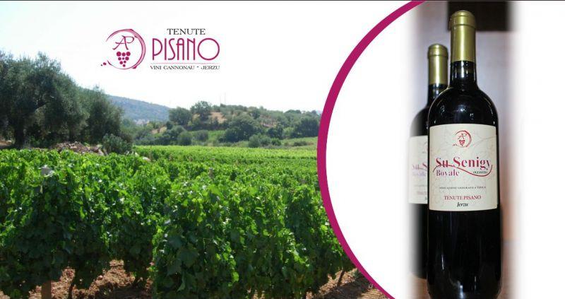 TENUTE PISANO Jerzu - offerta vino Su Senigy Bovale IGT medaglia oro concorso enologico B Nu